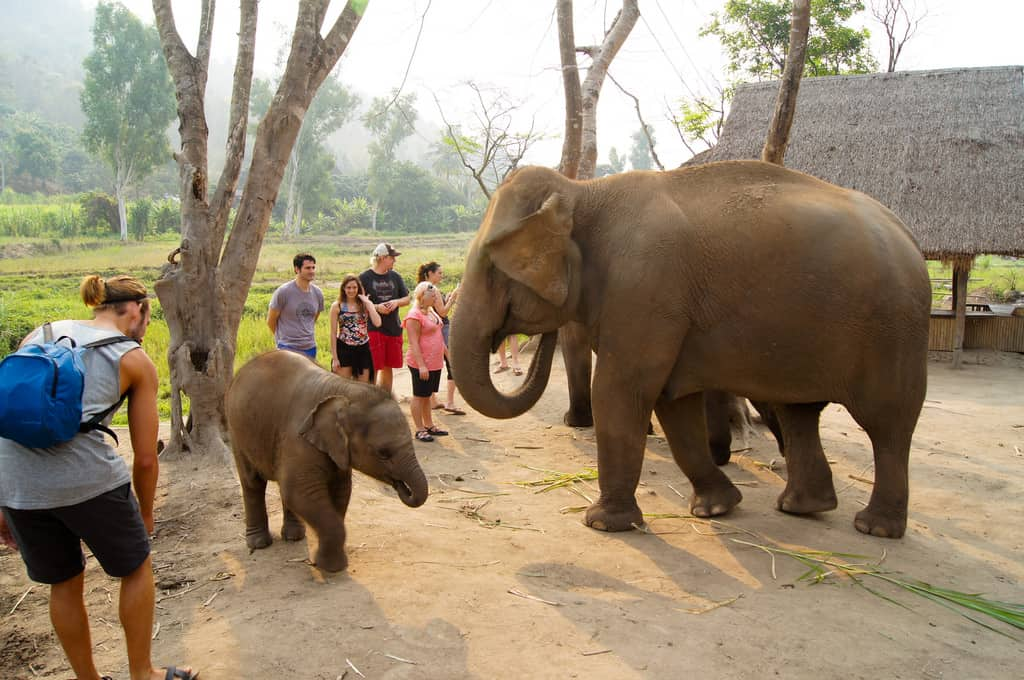 Temples and Elephants - Family Vacation With Teens