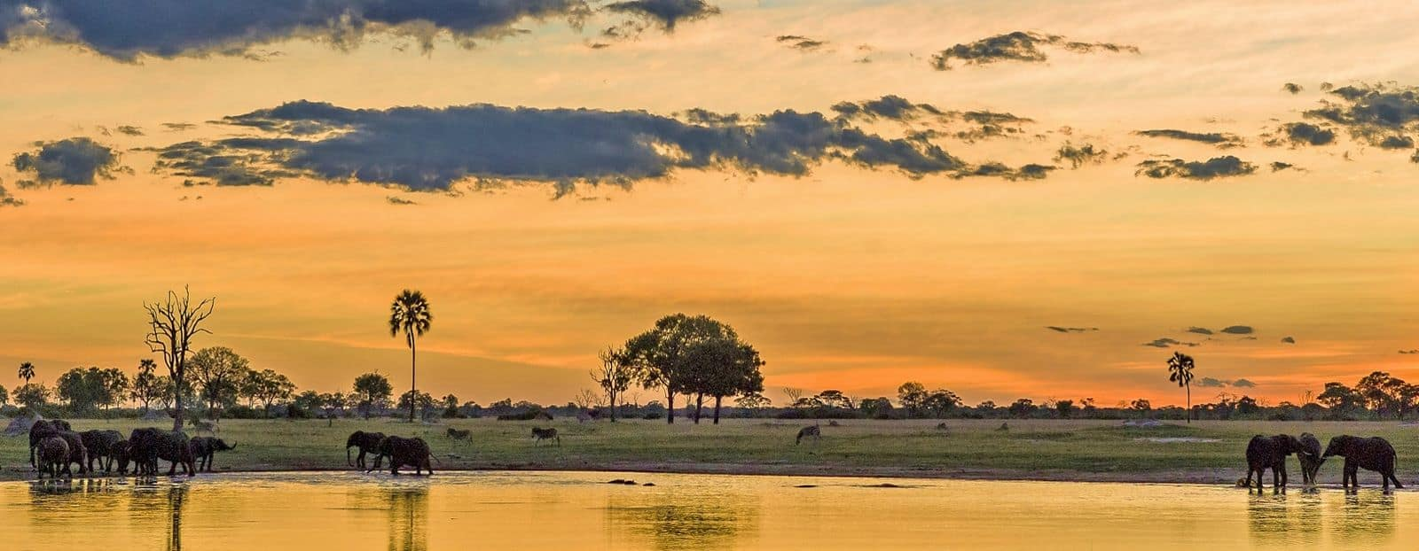 Chobe National Park - Botswana With Kids