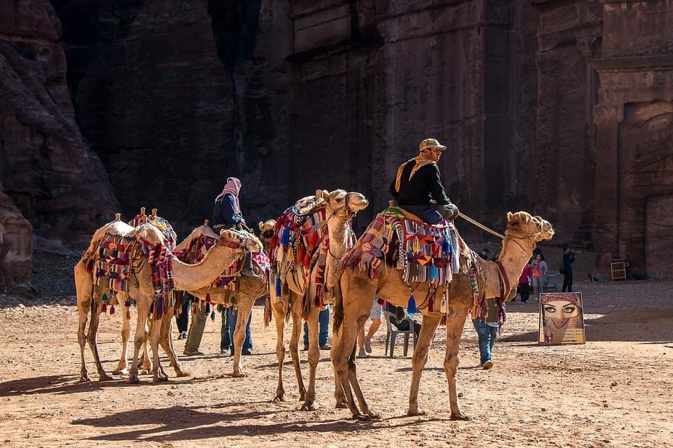 Camels - Jordan With Kids