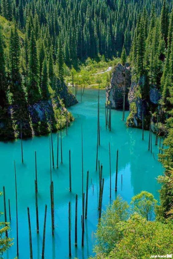Underwater Forest - Natural Wonder