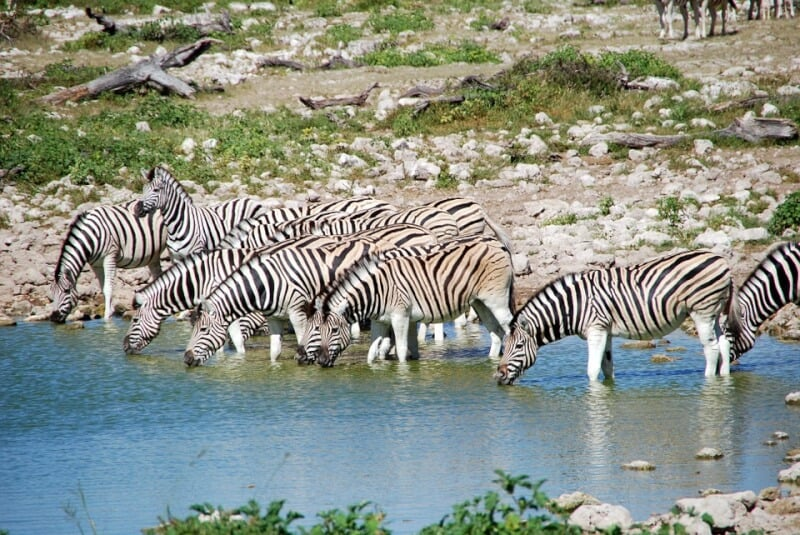 Etosha National Park - Namibia with Kids