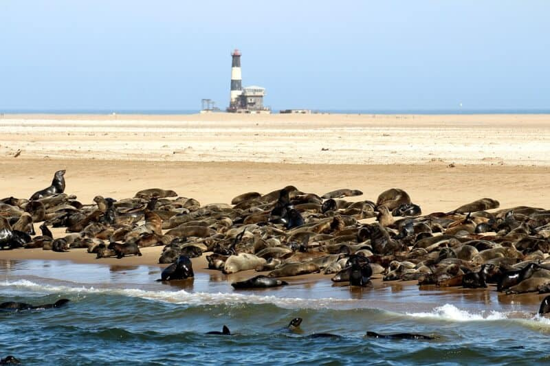 Seals - Namibia with Kids