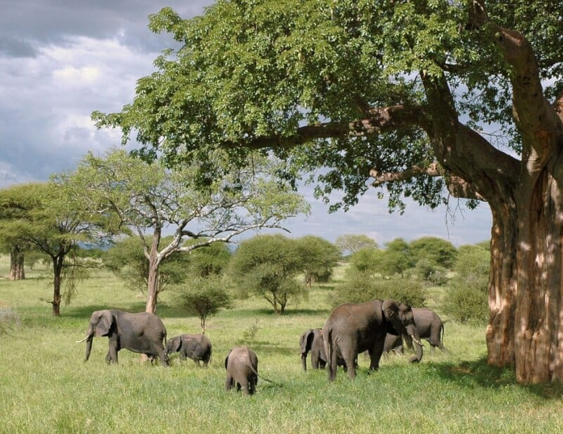 Elephants - Tanzania with Kids