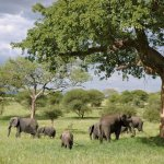 Places to Go With Kids: Tanzania with Kids
