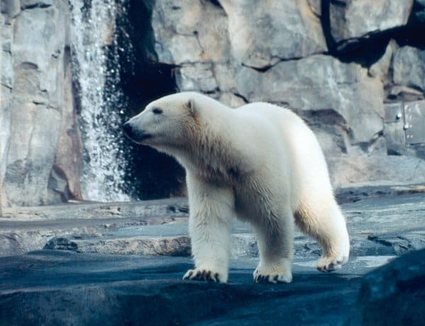 Alaska Zoo - Best Zoos in the USA