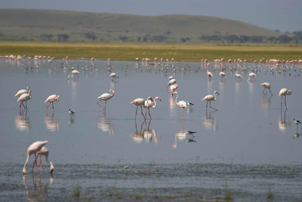 Amboseli National Park - Kenya Safari Guide