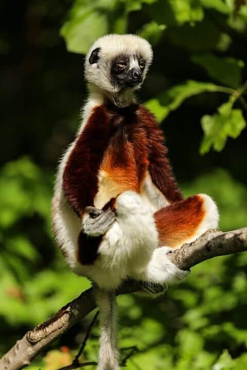 Andasibe-Mantadia National Park - Madagascar with Kids