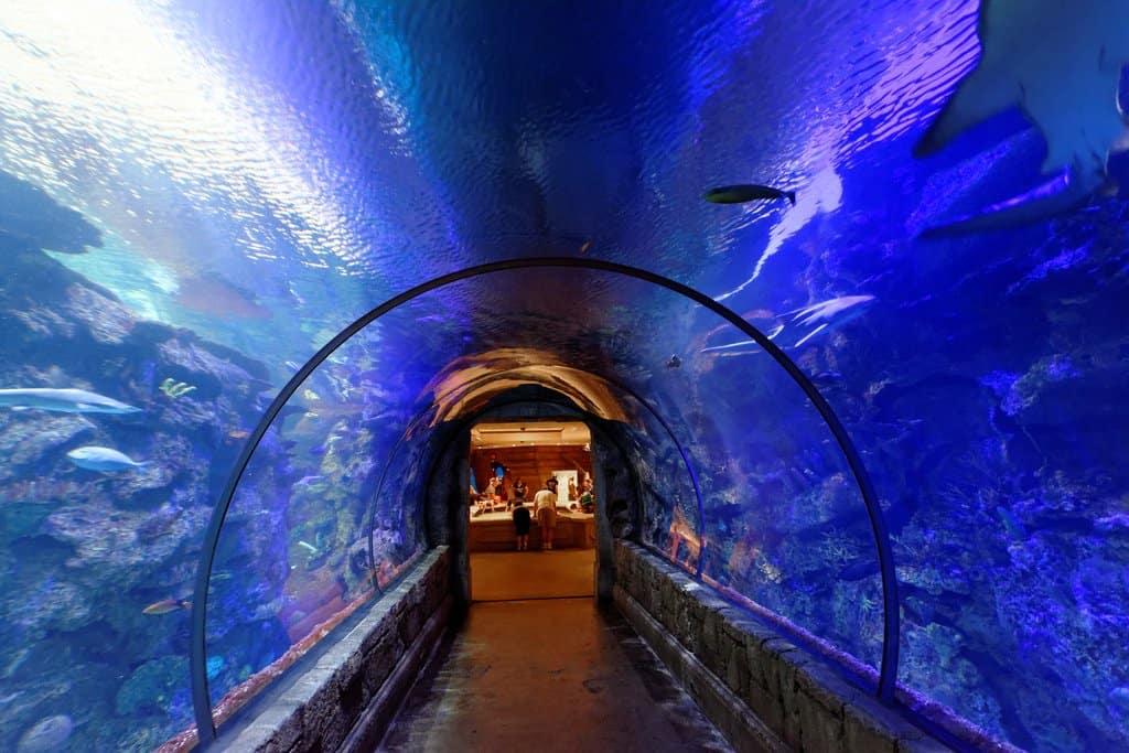 Shark Reef Aquarium - Las Vegas with Kids