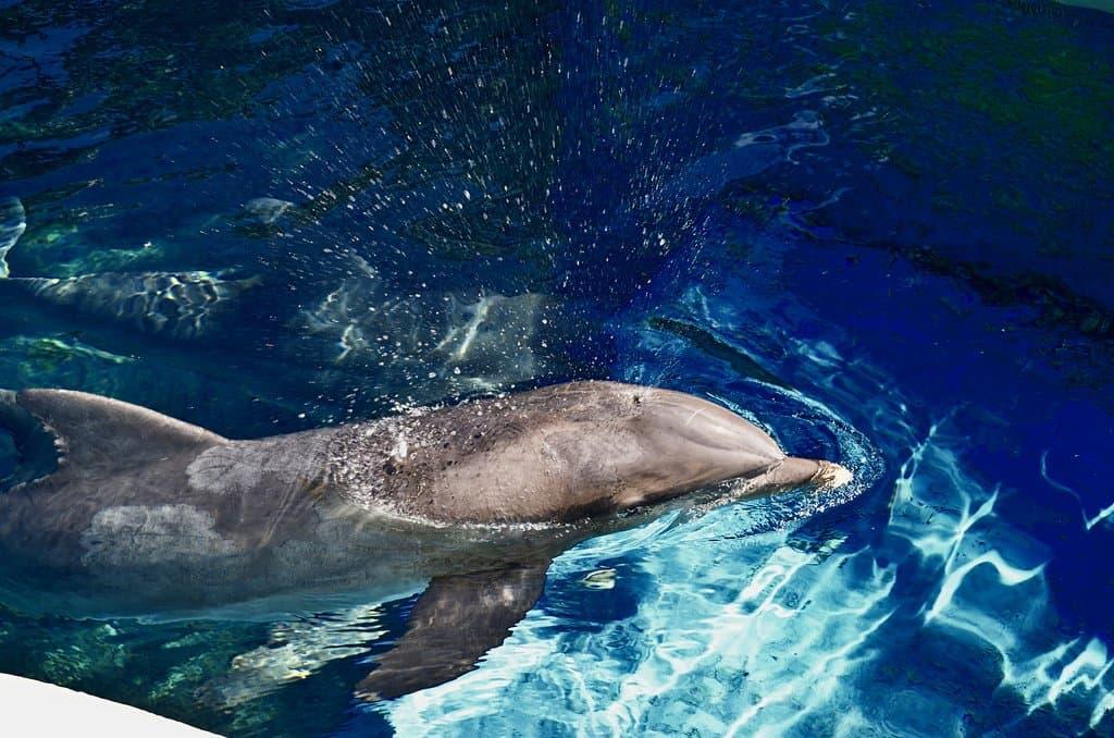 Siegfried & Roy's Secret Garden and Dolphin Habitat