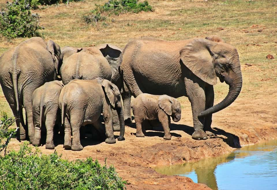 Kruger National Park - South Africa with Kids