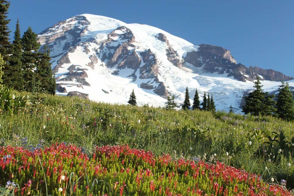 Mount Rainier National Park - Best National Parks In USA