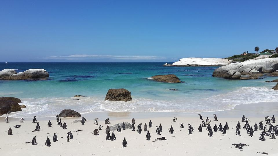 Boulders Beach - South Africa with Kids