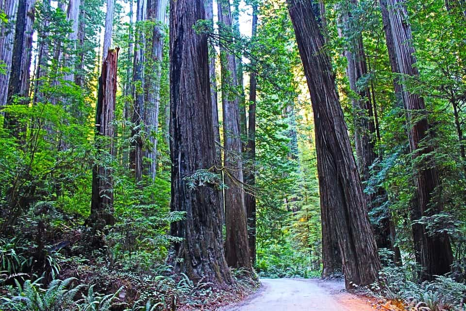 Redwood National Park - Best National Parks In USA