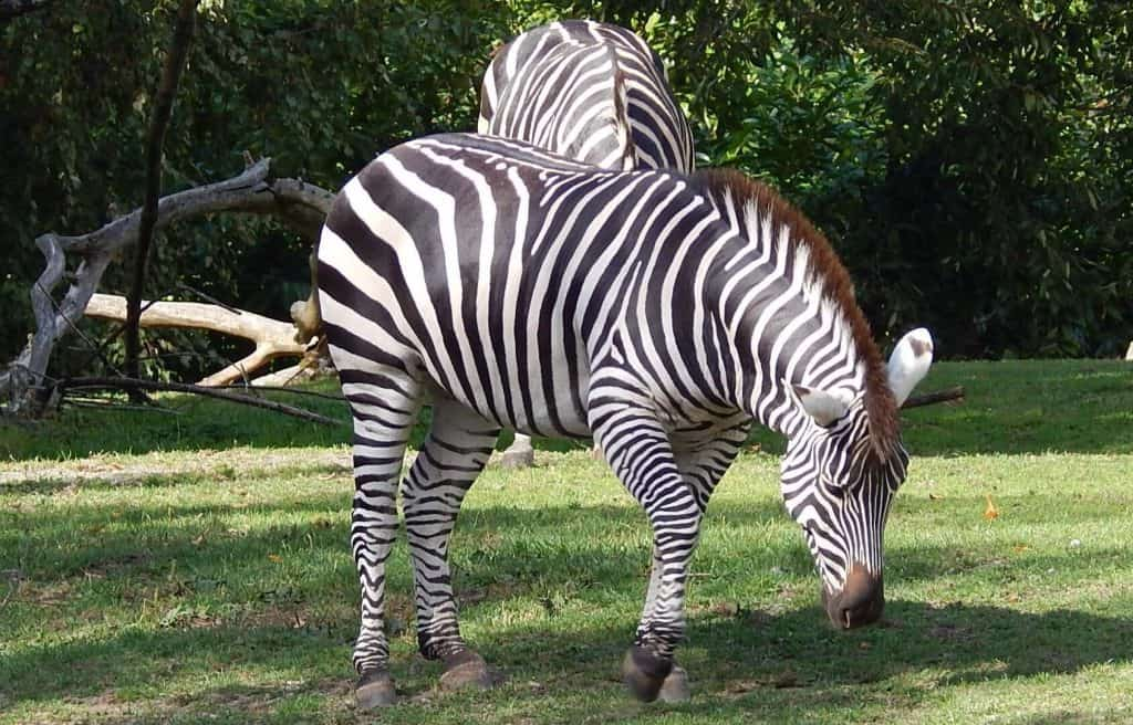 Woodland Park Zoo  - Best Zoos in the USA