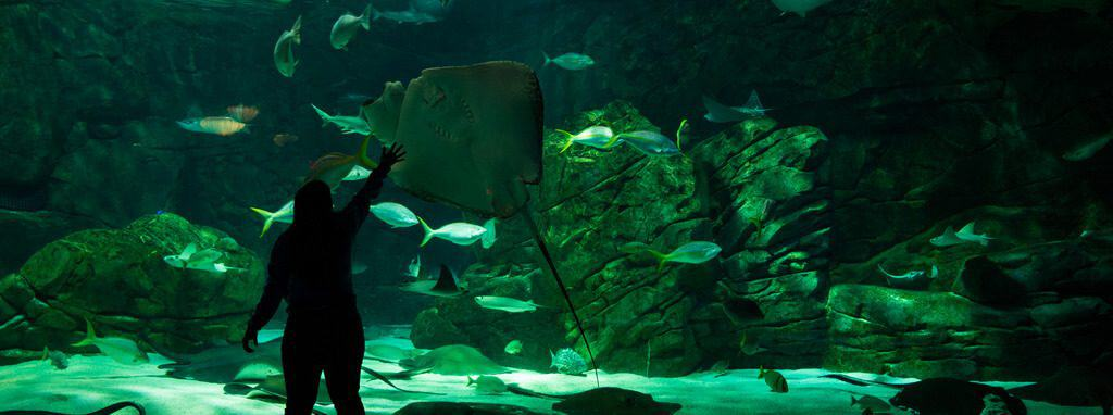 Ripley's Aquarium - Things to Do in Myrtle Beach with Kids