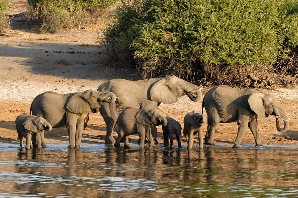 Chobe National Park - Best Things to do in Botswana with kids
