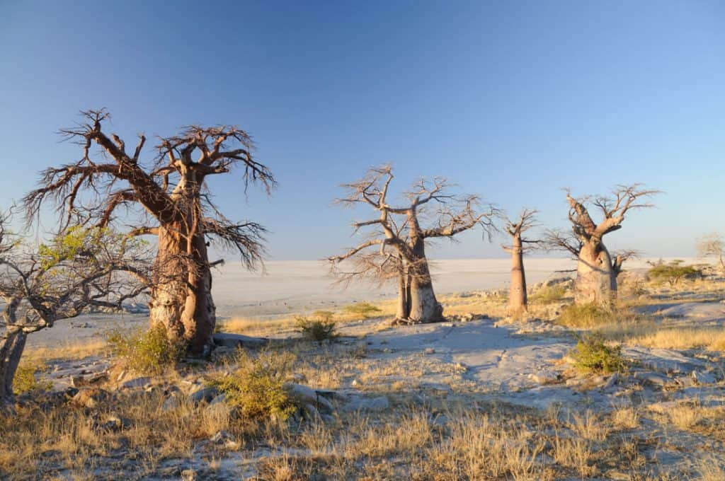 Kubu Island - Best Things to do in Botswana with kids