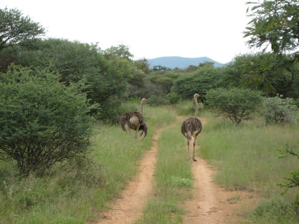 Mokolodi Nature Reserve - Best Things to do in Botswana with kids