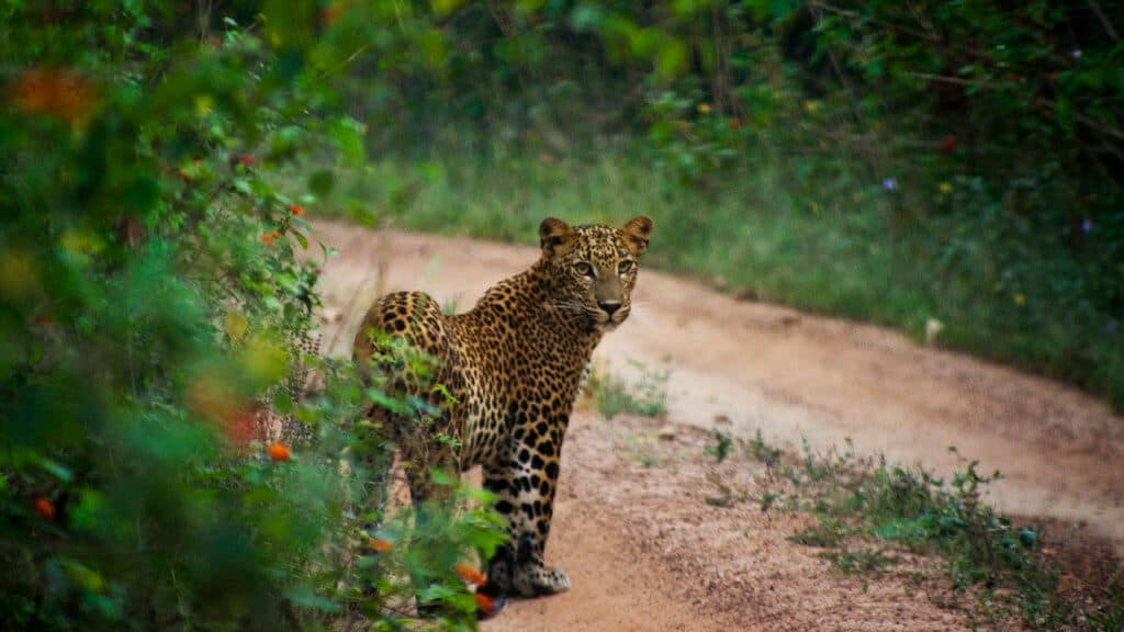 Yala West National Park
