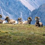 Animals Your Kids Might Spot In The Rocky Mountains