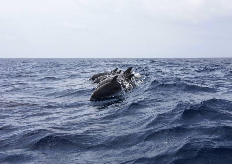 Dolphins Cape Verde