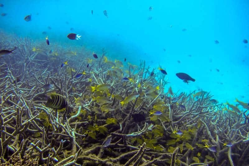 Anegada Island - Family Vacation to the British Virgin Islands