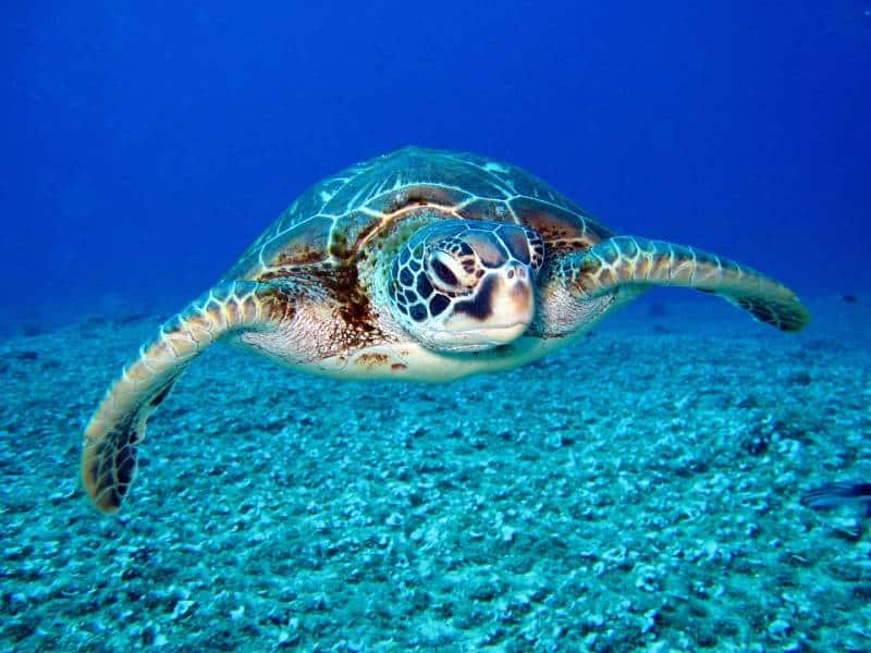 Turtle- Family Vacation to the British Virgin Islands