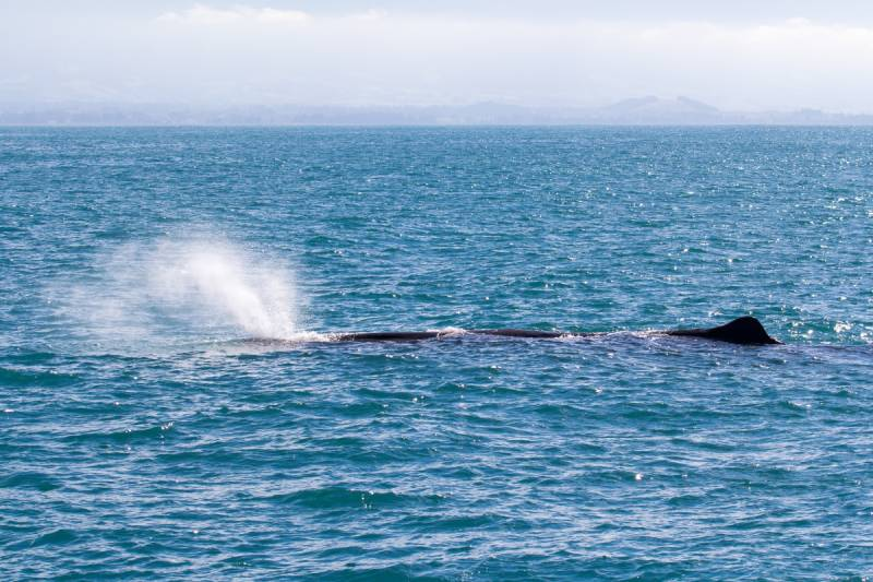 Whale Watching - Sydney Australia With Kids