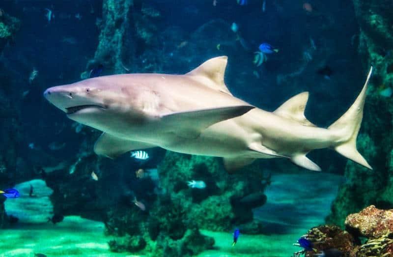 SEA LIFE Sydney Aquarium - Sydney Australia With Kids