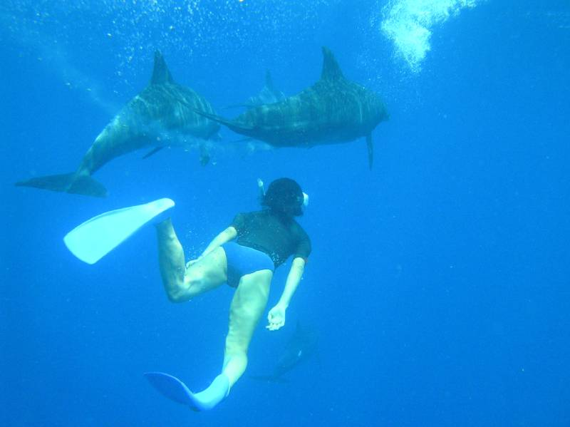 Swimming with Dolphins - Bahamas for a short weekend Trip