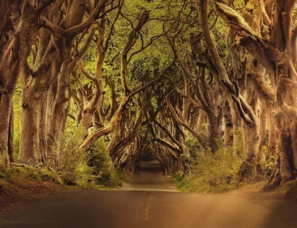 Dark Hedges - Game of Thrones Locations You Can Actually Visit