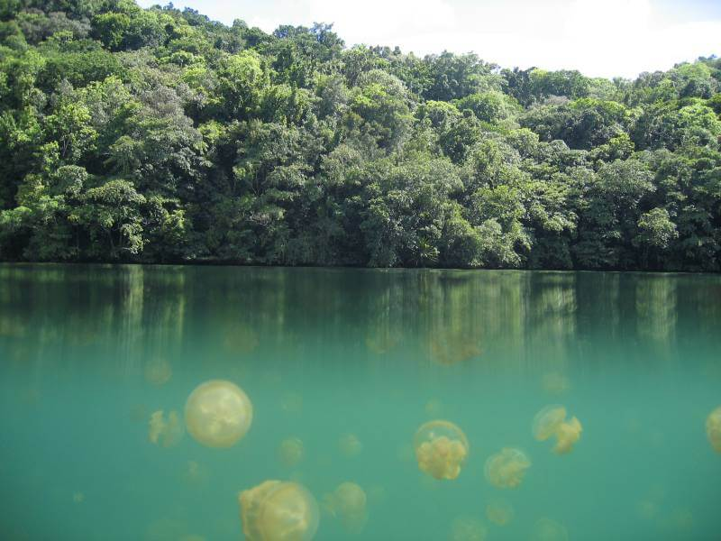 Jellyfish Lake - Best Natural Swimming Holes