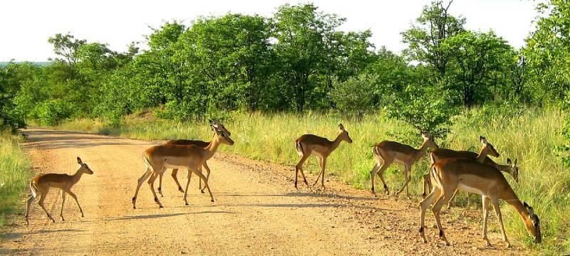 Kruger National Park - Unique Spots To Visit With Kids