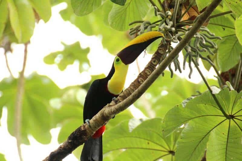 Manuel Antonio National Park - Unique Spots To Visit With Kids