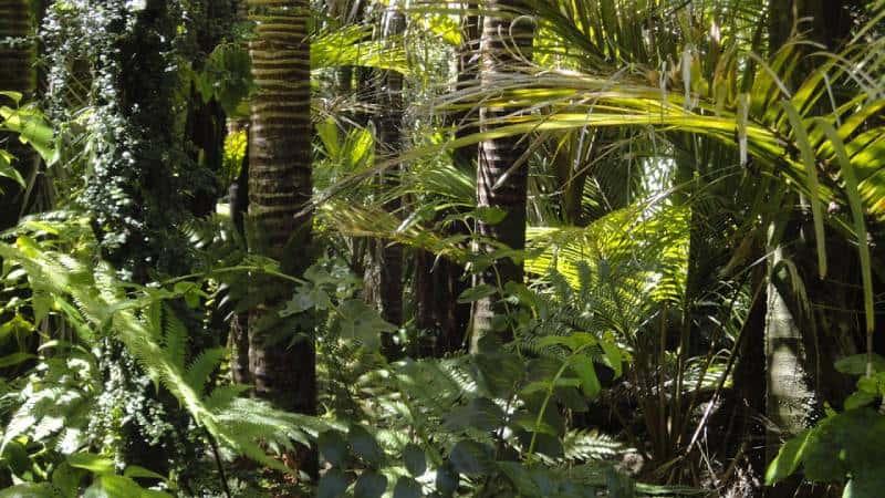 Amazon - Swing at the End of the World – Baños, Ecuador