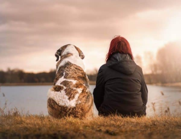 What to Do with Your Pets When You Travel