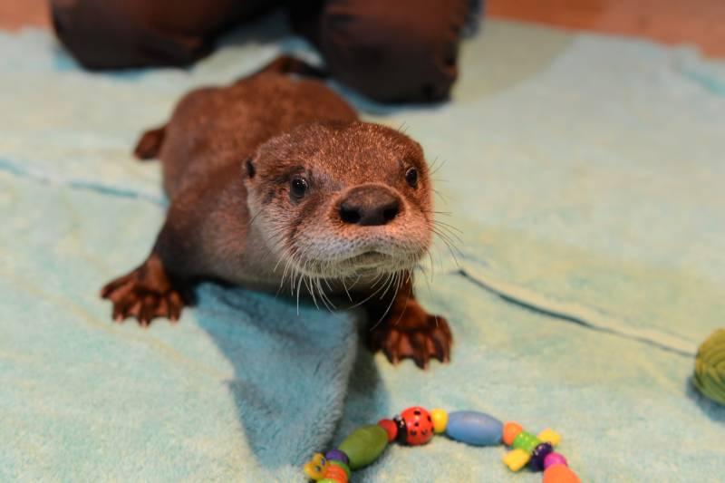 Otter encounters at Audubon Nature Institute