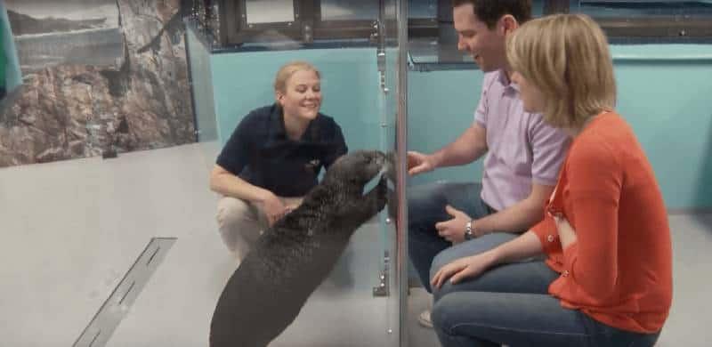 Otter encounters at Georgia Aquarium