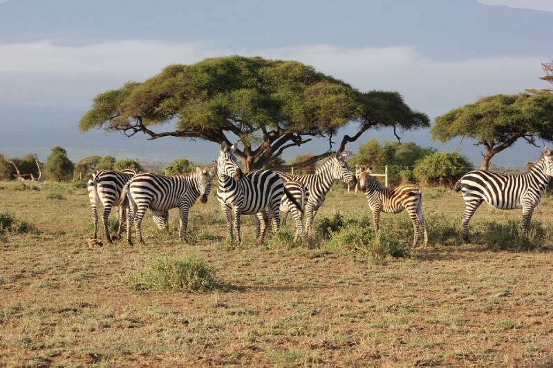 Maasai Mara National Reserve, Kenya - Best African Countries