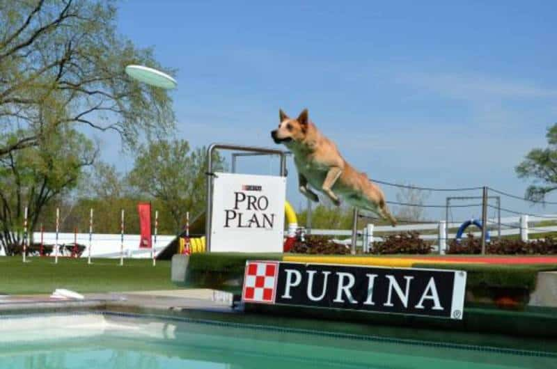 Purina Farms - Things to Do in St Louis MO