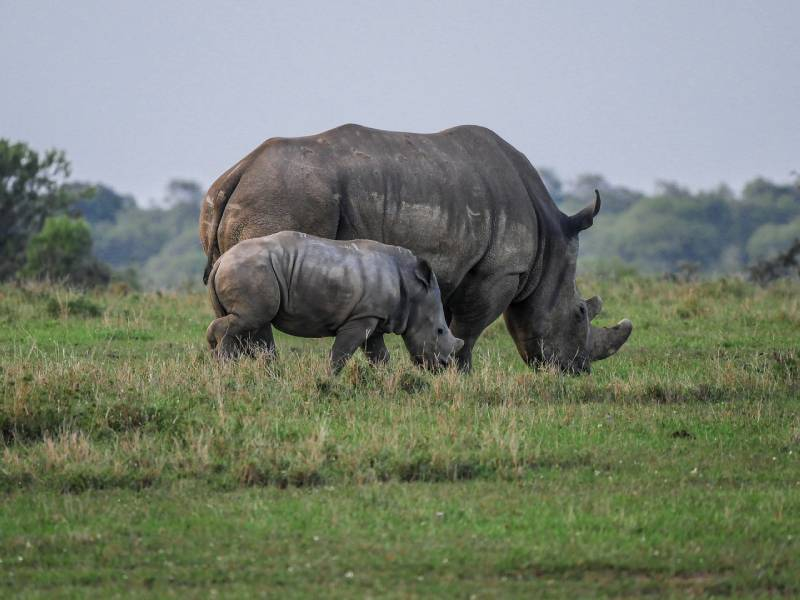 Rhino, Uganda - Best African Countries
