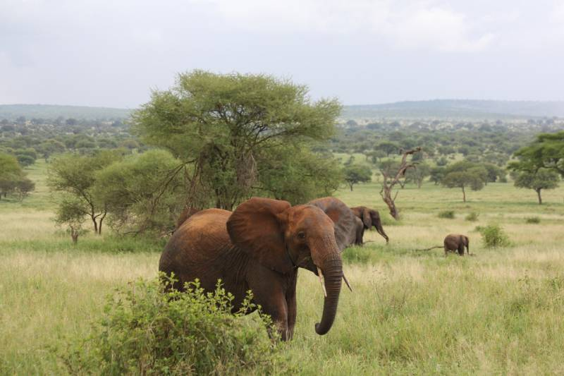 Tarangire National Park - Best African Countries