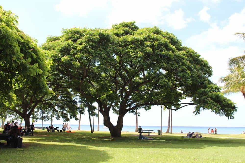 Things to Do in Big Island, Hawaii