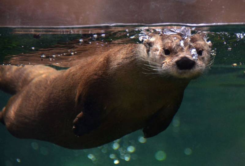 Otter encounters at Virginia Living Museum