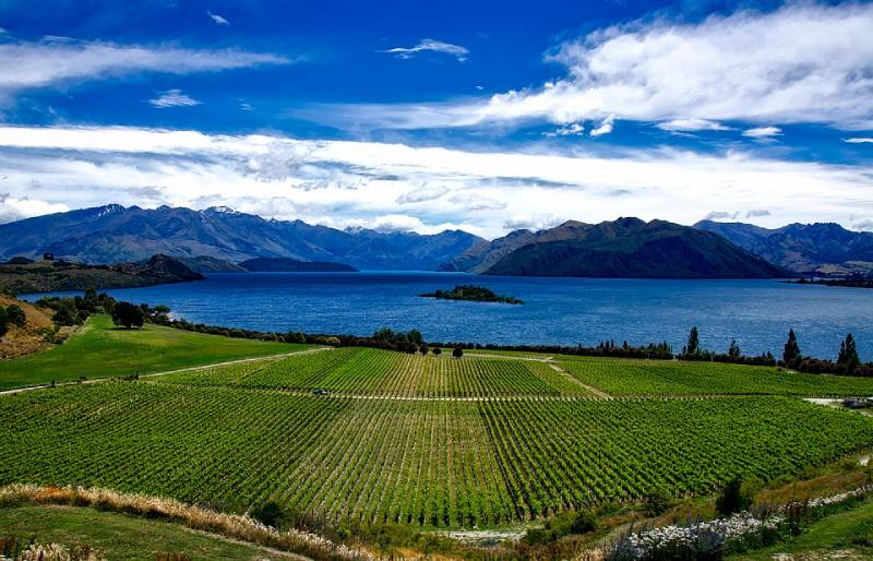 Winery - Things to Do in South Island of New Zealand