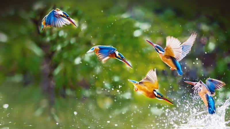 Birdwatching, Gambia