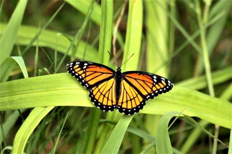 Butterfly Farm - Aruba with Kids