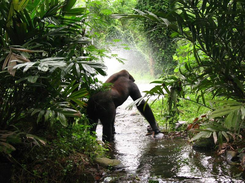 Gorilla Trekking Tour - Fun Things to Do in Uganda With Family