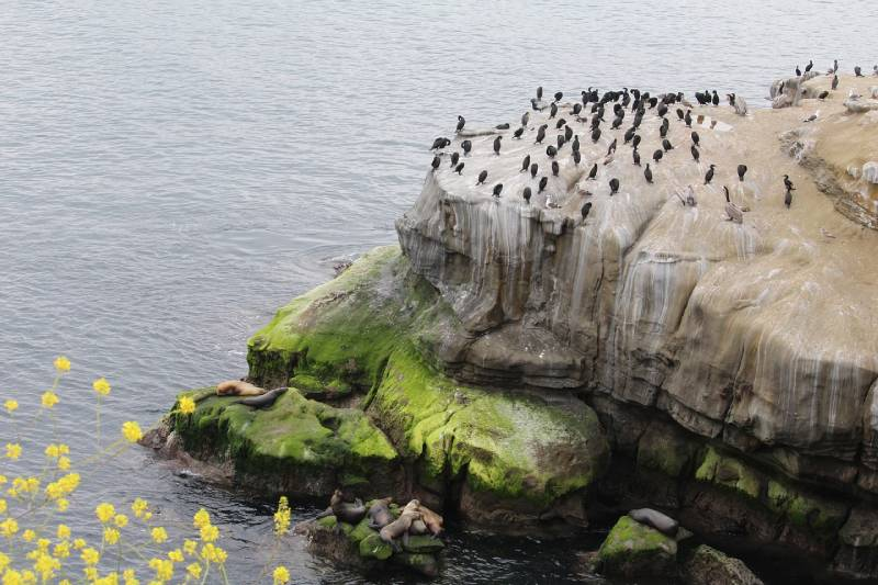 La Jolla Cove- Free Things to Do in San Diego, California