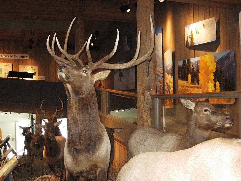 Visitor Center - Free Things to Do in Jackson Hole